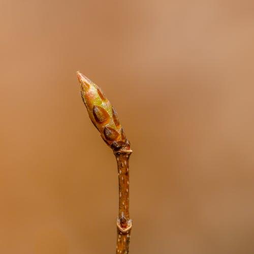 4월, 가지, 계절의 무료 스톡 사진