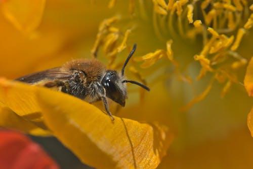 Free stock photo of bee, close up shot, honeybee