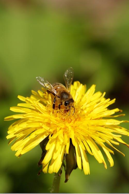 Fotos de stock gratuitas de abeja, al aire libre, brillante