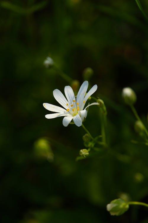 Δωρεάν στοκ φωτογραφιών με dof, fleur, άγριος