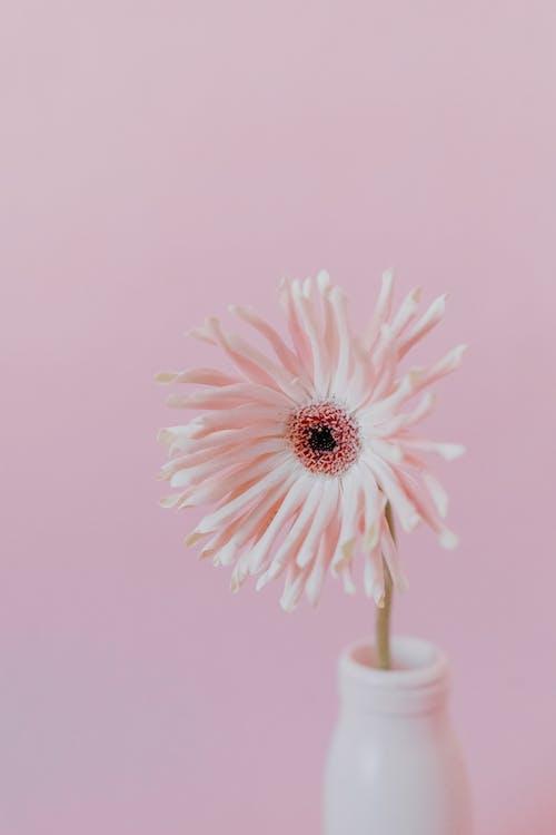 Fotos de stock gratuitas de de cerca, delicado, flor