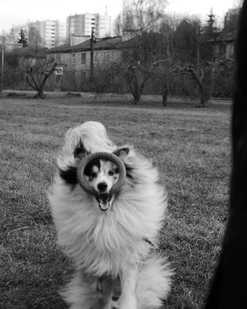 Бесплатное стоковое фото с вертикальный выстрел, домашнее животное, игра