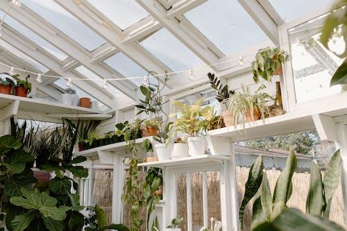 Fotos de stock gratuitas de abundancia, bombilla, botánica