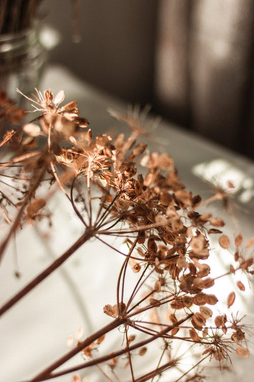Dry plant sprigs with seeds at home