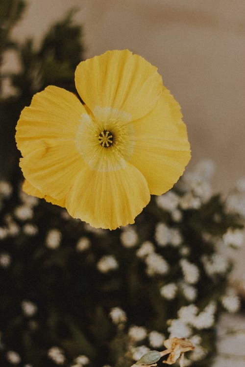High angle of blossoming yellow flower with tender petals and pleasant aroma on blurred background