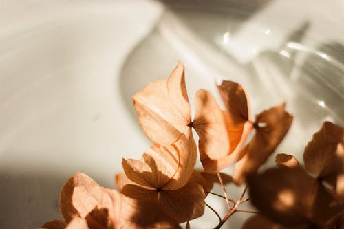 Closeup of branch with dried petals of hydrangea flowers placed on white shine ceramic surface