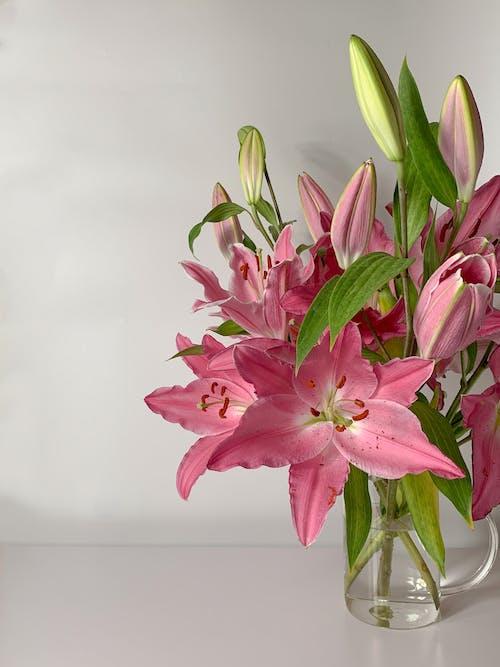 Immagine gratuita di avvicinamento, fiori rosa, fioritura