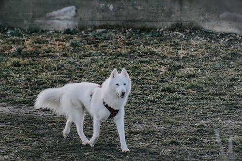 Безкоштовне стокове фото на тему «вовк, зима, милий»