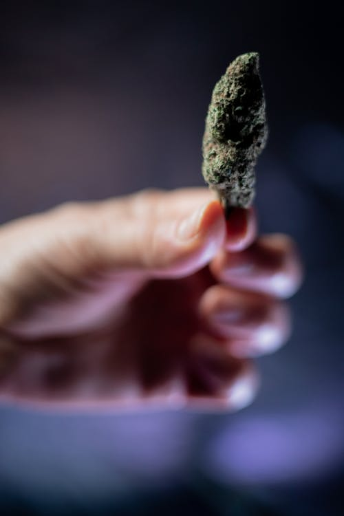 Close-Up Photo of Person Holding Cannabis Flower