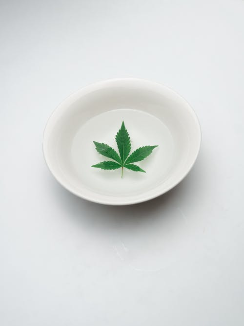 Photo of Marijuana Leaves on White Ceramic Plate