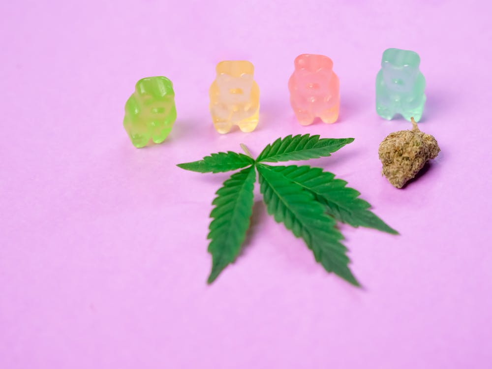 Photo of Gummy Bears on Pink Background