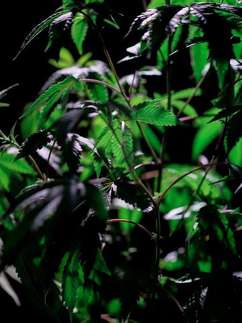 綠色的樹葉在關閉攝影