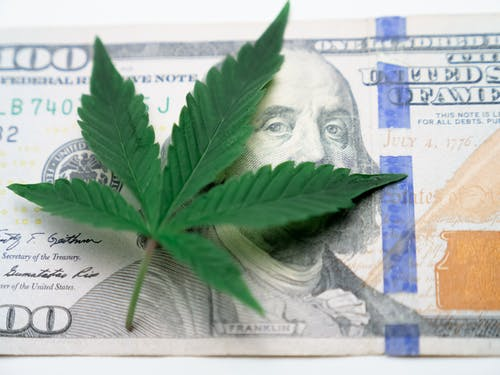Photo of Cannabis on Top of One Hundred Dollar Bill