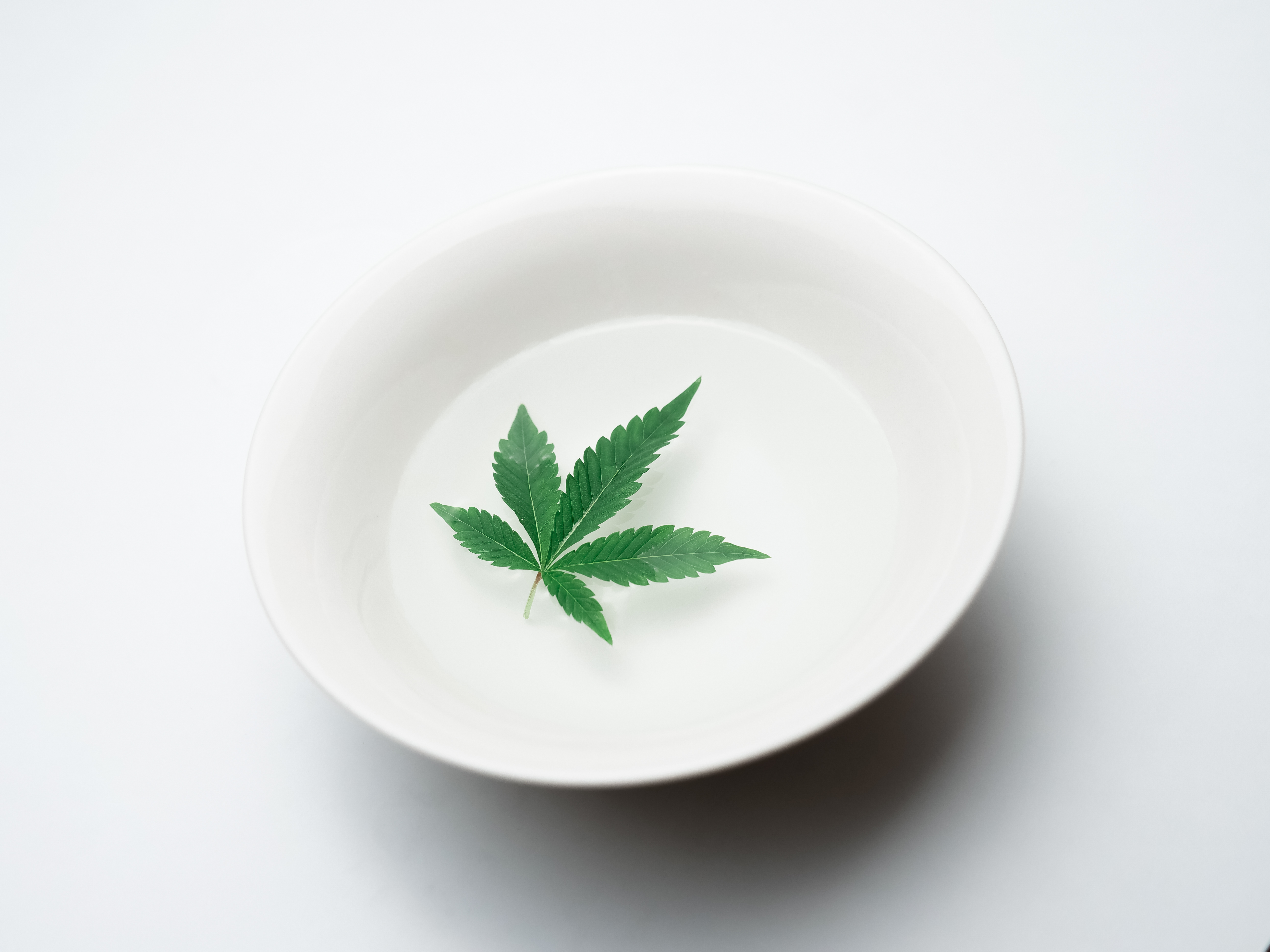 photo of green leaf on white ceramic plate