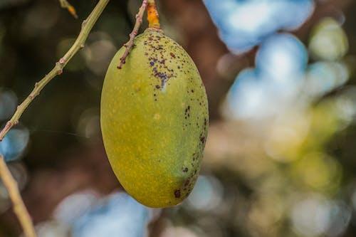 Foto profissional grátis de árvore frutífera, fruta, fruta fresca