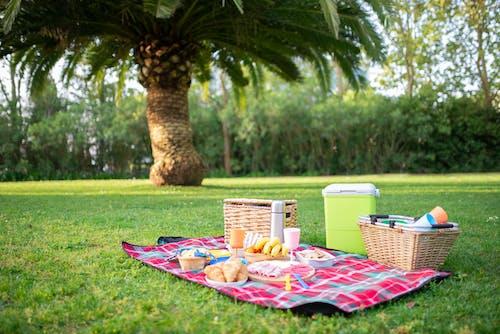 Photos gratuites de aliments, herbe, nappe de pique-nique