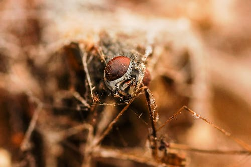 Brown and Black Insect on Brown Dried Grass in Close Up Photography