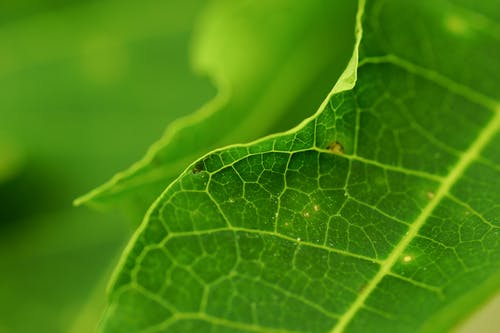 Free stock photo of green, leaf, nature