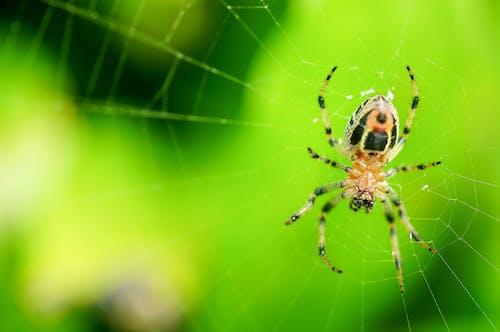 거미, 녹색, 망의 무료 스톡 사진