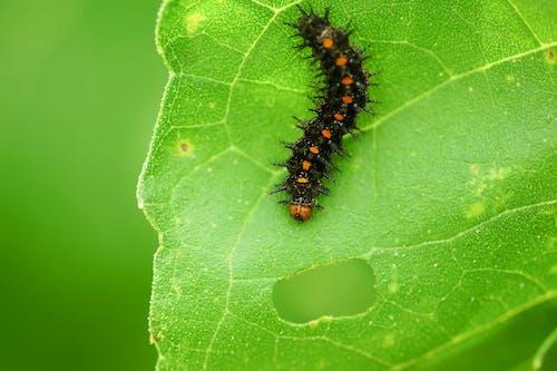 곤충, 애벌레, 야생동물의 무료 스톡 사진