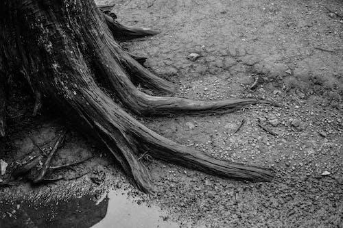 블랙 앤 화이트, 블랙 앤드 화이트, 뿌리의 무료 스톡 사진