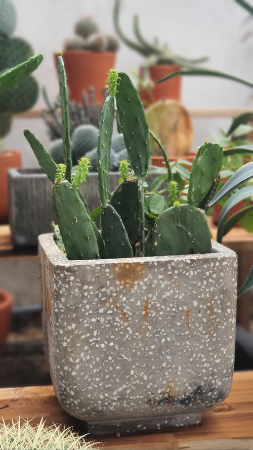 Photos gratuites de cactus, centrales, photo en gros plan