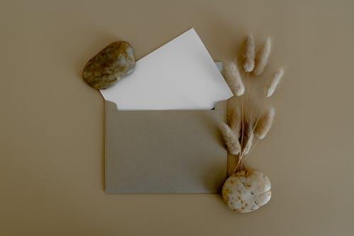 Бесплатное стоковое фото с бумага, в помещении, выращивать