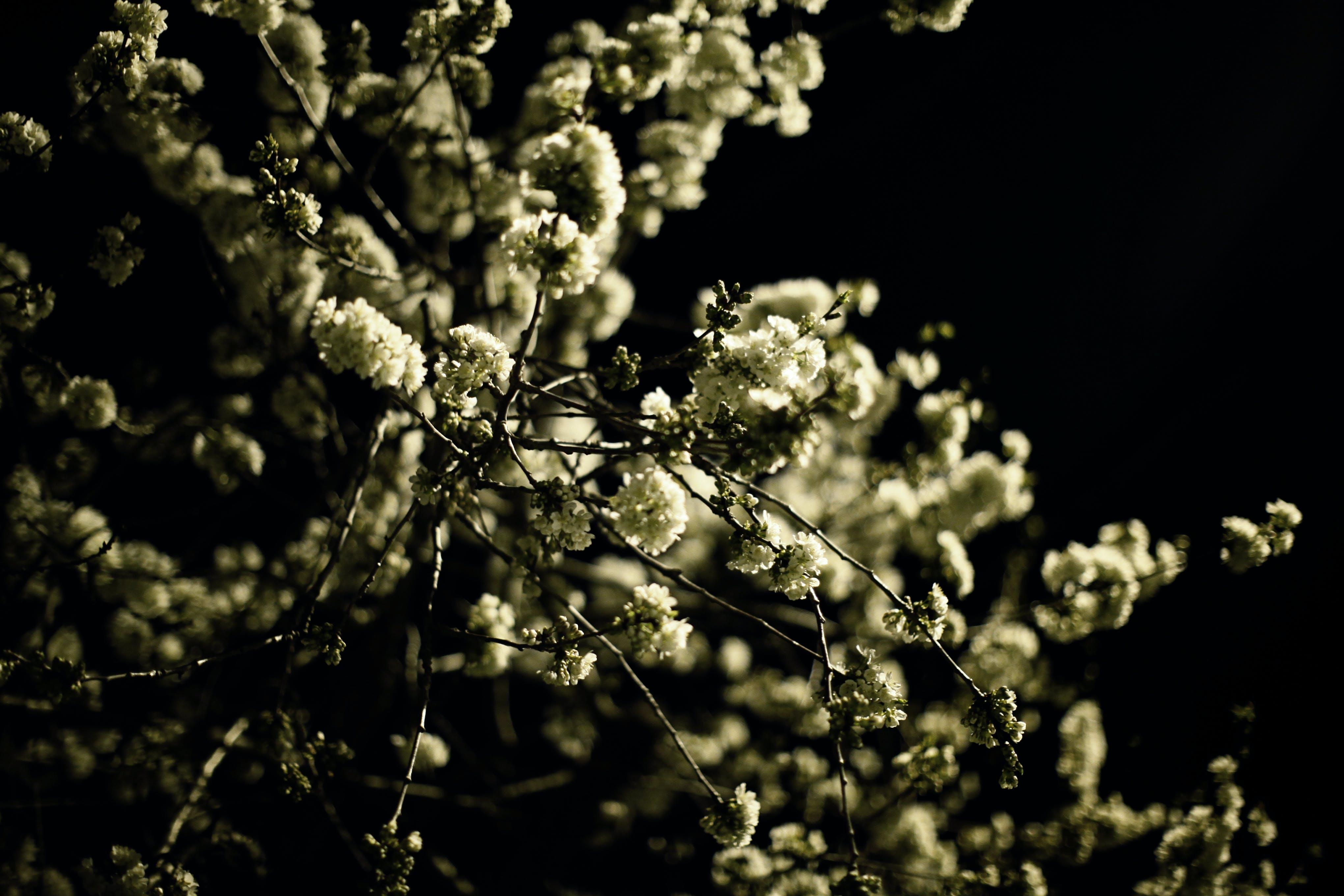 Gratis lagerfoto af #blooms #night #spring