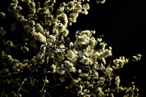 #blooms #night #spring 的 免费素材照片
