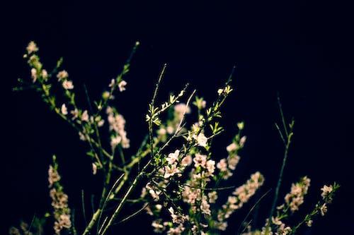 增長, 季節, 工厂, 廠 的 免费素材照片