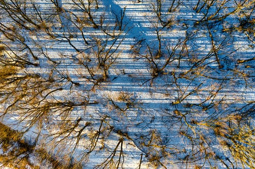 Brown Trees on Snow Covered Ground