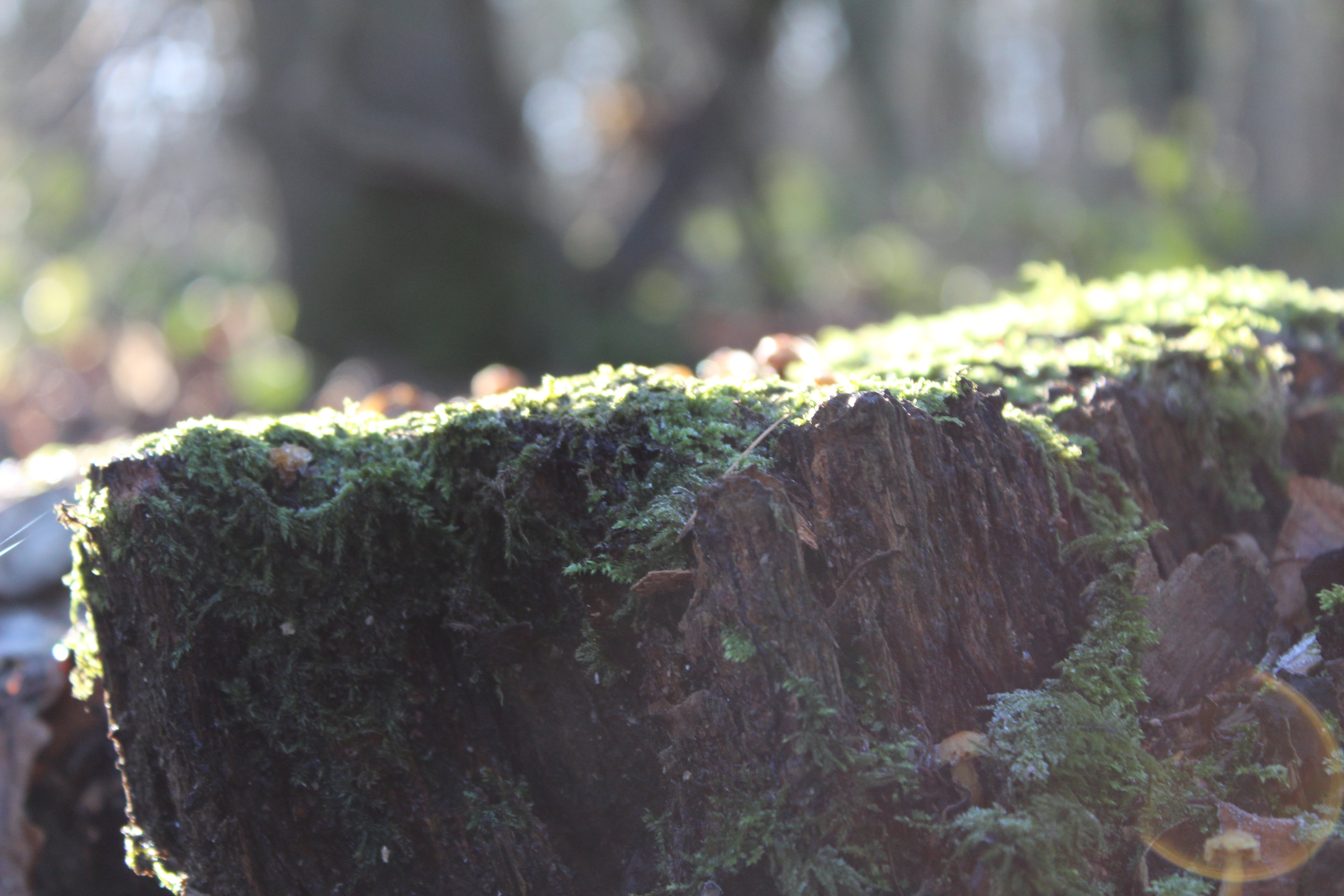 Free stock photo of moss, stump, tree, wildlife