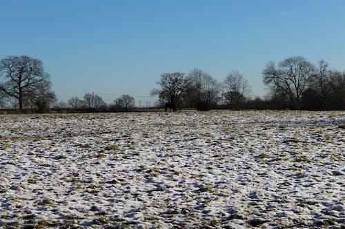 Gratis stockfoto met bomen, ijs, sneeuw, sportveld