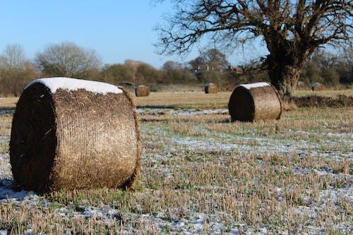 Gratis stockfoto met baal, boerenbedrijf, hooi, sneeuw
