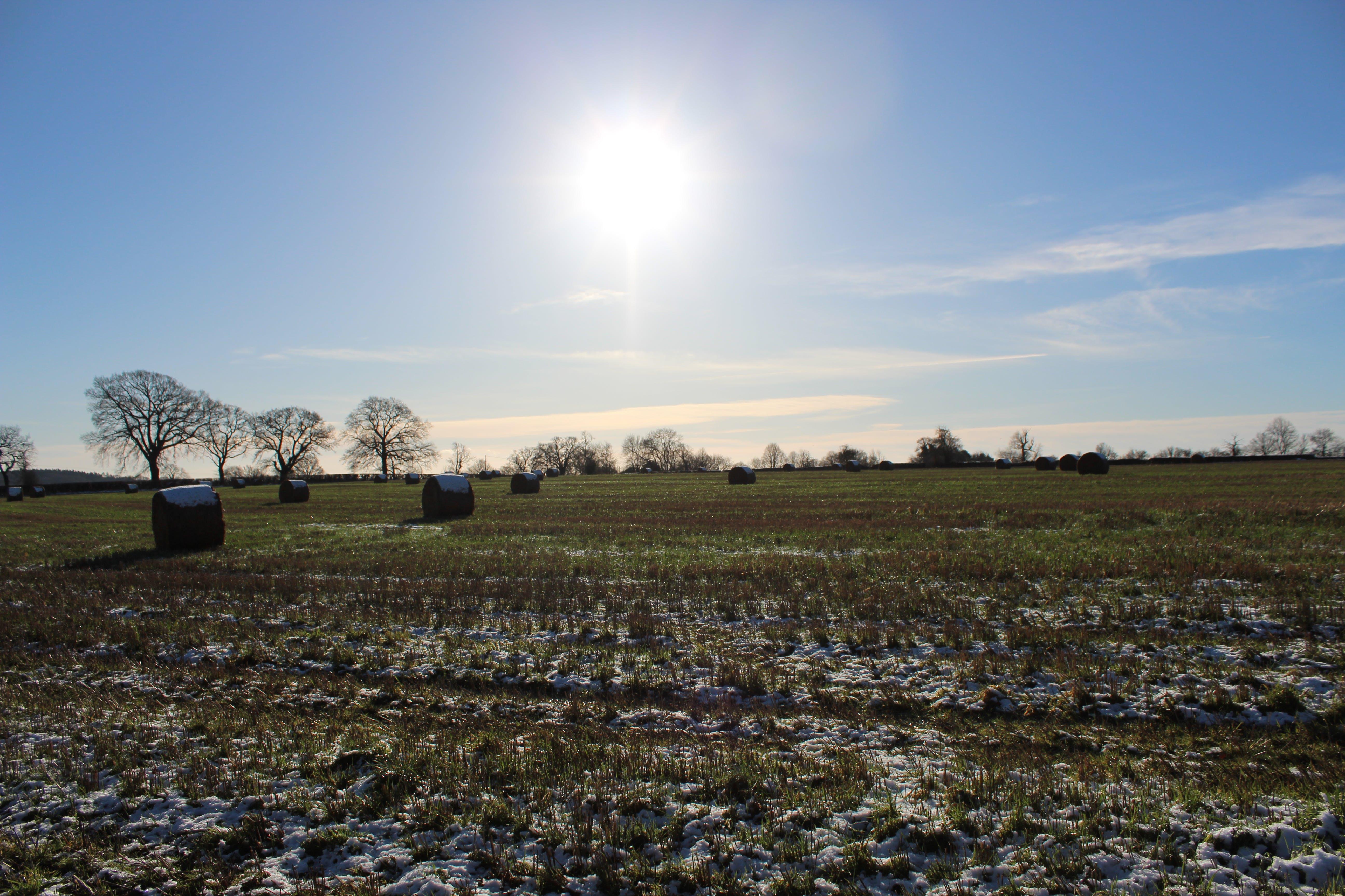 Free stock photo of field, sun, sunrise, walking