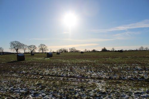 Gratis stockfoto met lopen, sportveld, winter, zon