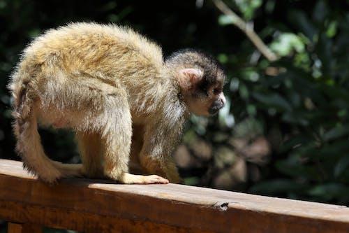 公園, 動物, 動物園, 動物攝影 的 免费素材照片