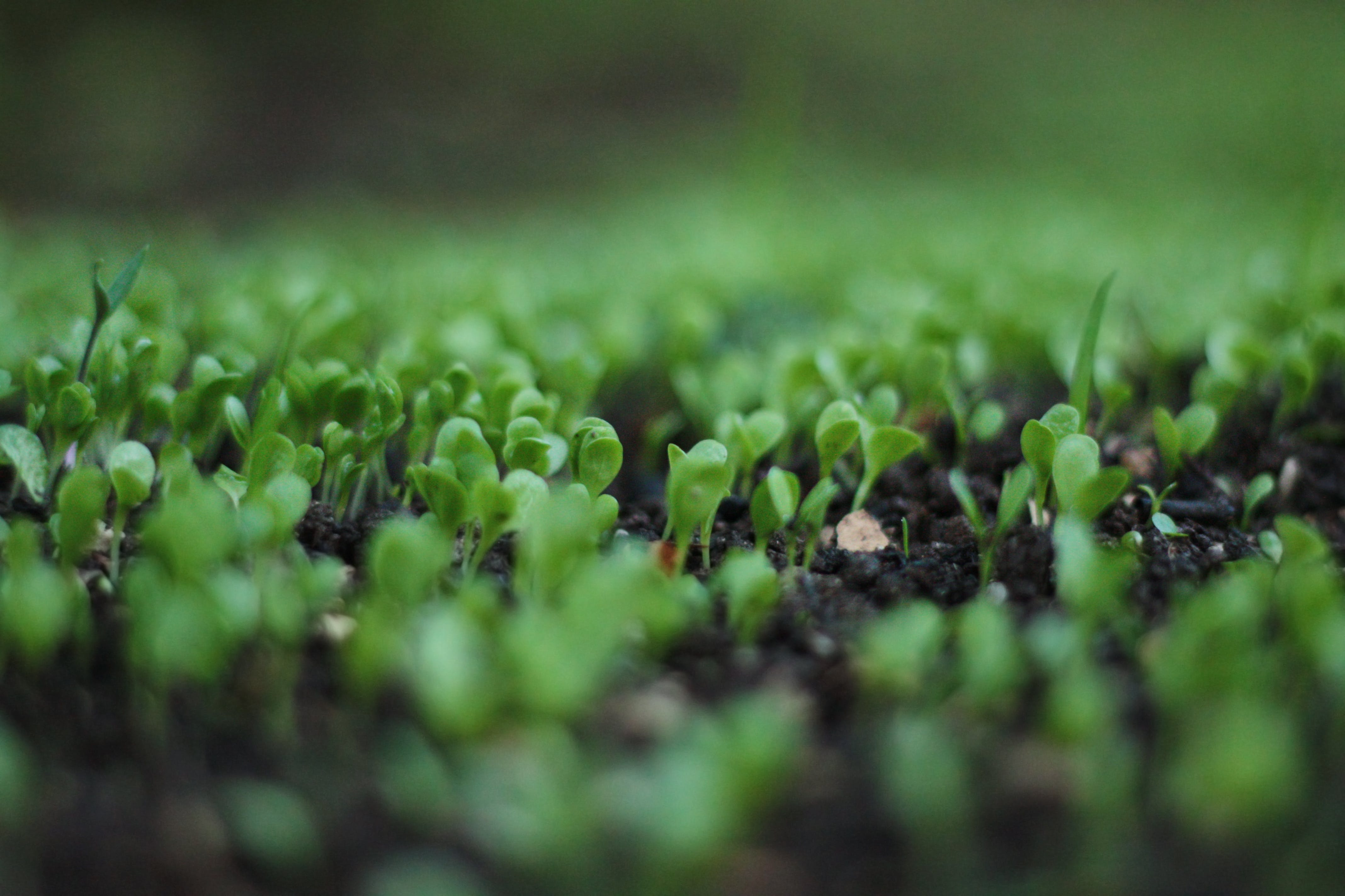 Green Leafed Plant Bokeh Photography