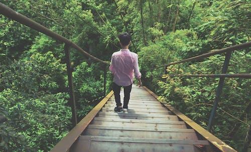 경치, 경치가 좋은, 계단, 공원의 무료 스톡 사진