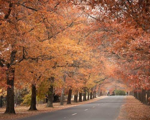 Gray Concrete Road Between Brown Trees