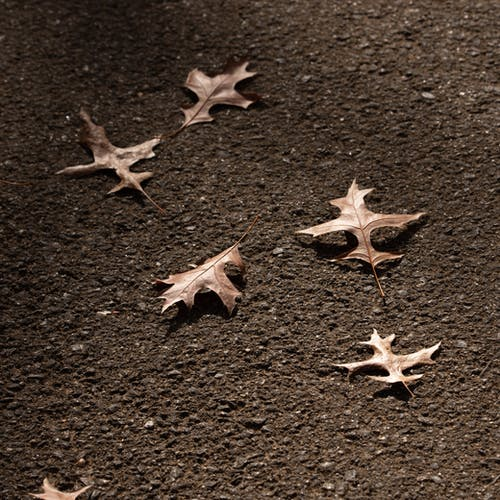White and Brown Maple Leaves on Brown Sand