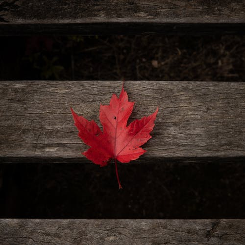 Red Maple Leaf on Brown Wooden Surface