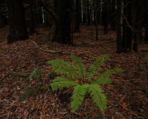 Green Fern Plants on Brown Soil
