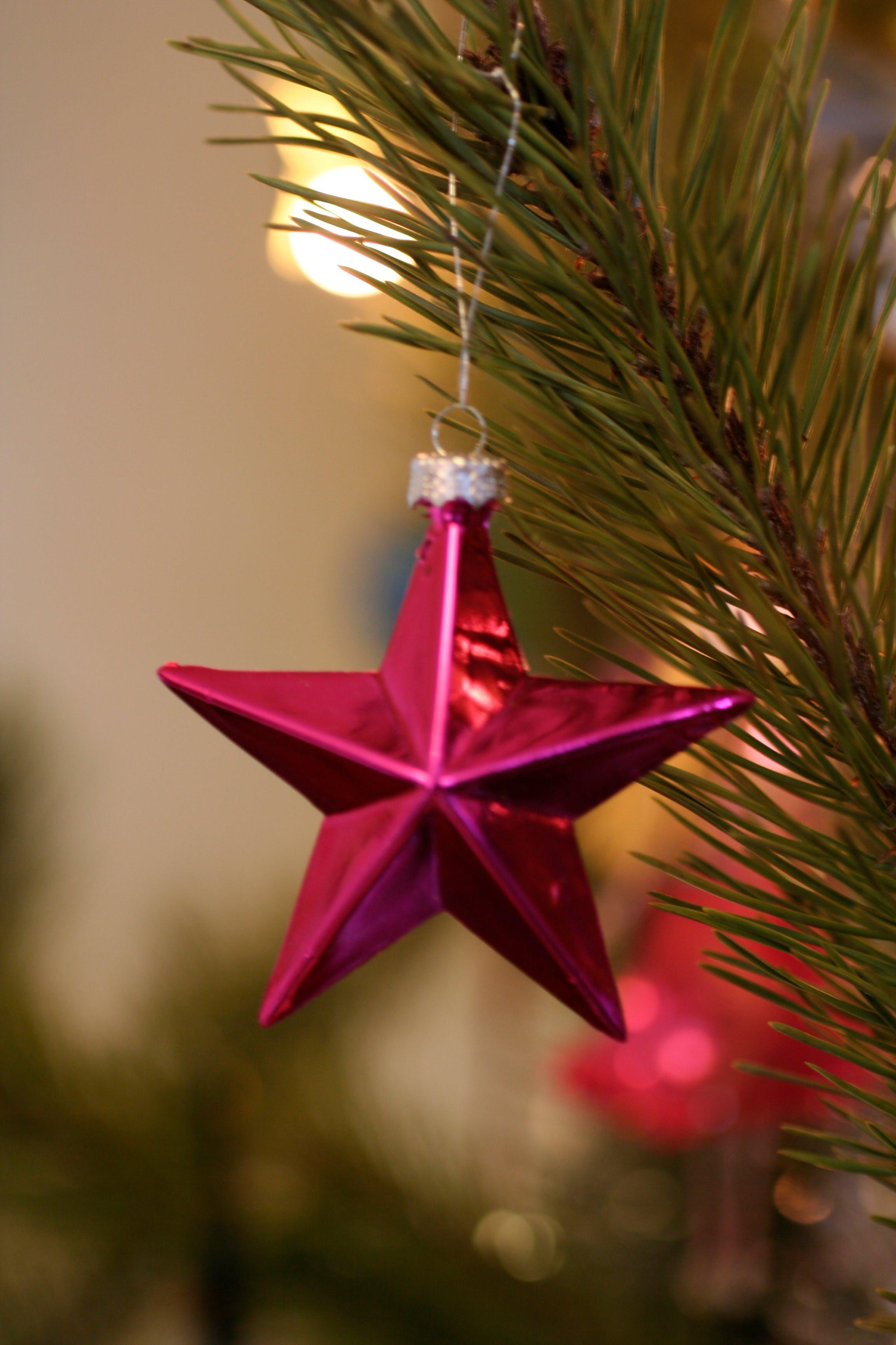 Free stock photo of christmas, christmas decor, christmas decoration, christmas tree