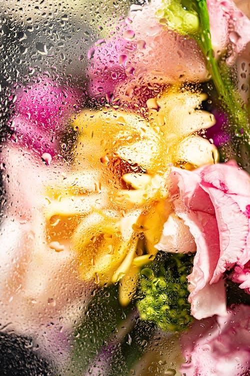 Fotobanka sbezplatnými fotkami na tému detailný záber, flóra, kvapôčky vody