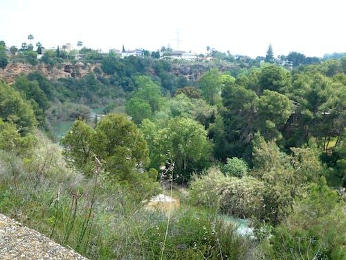 Gratis stockfoto met bomen, huizen, rivier