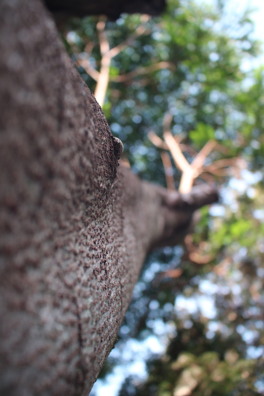 Macro Shot Photography of Brown Twigs