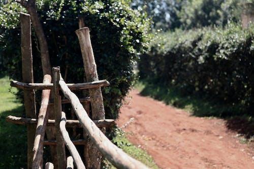围栏, 門 的 免费素材照片