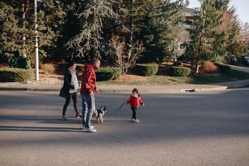 Man in Red Jacket and Gray Pants Walking With Black and White Short Coated Dog on on Near on on