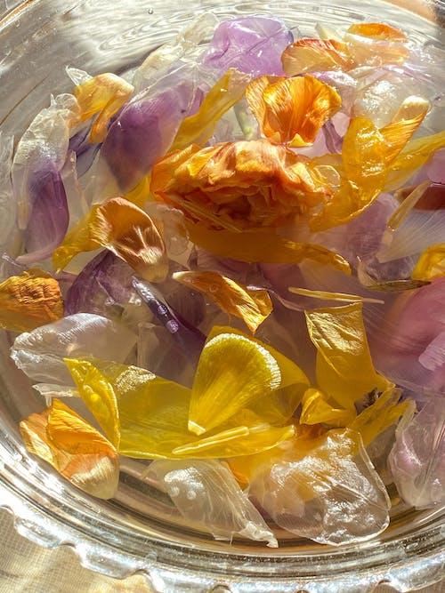 Gratis lagerfoto af aroma, aromatisk, blomst